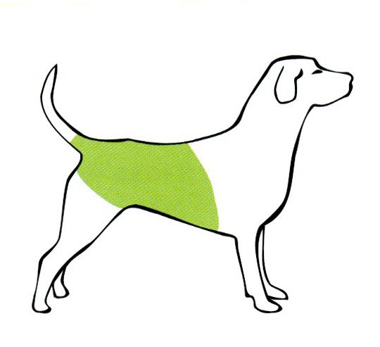 Кожные заболевания собак — как выглядят, чем лечить 21