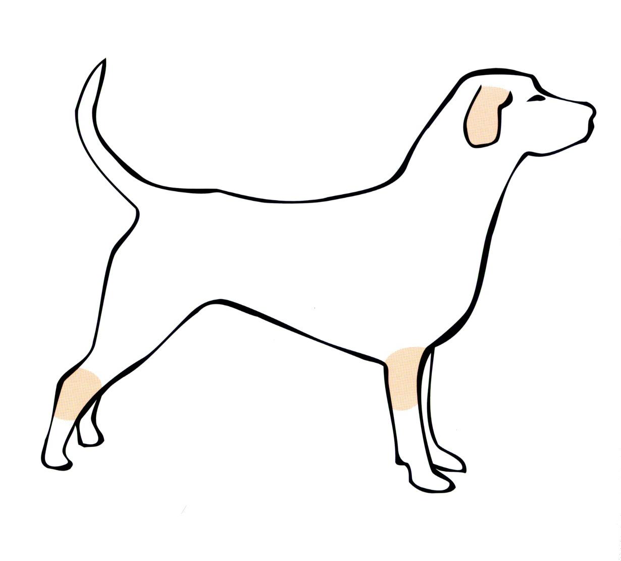 Кожные заболевания собак — как выглядят, чем лечить 24