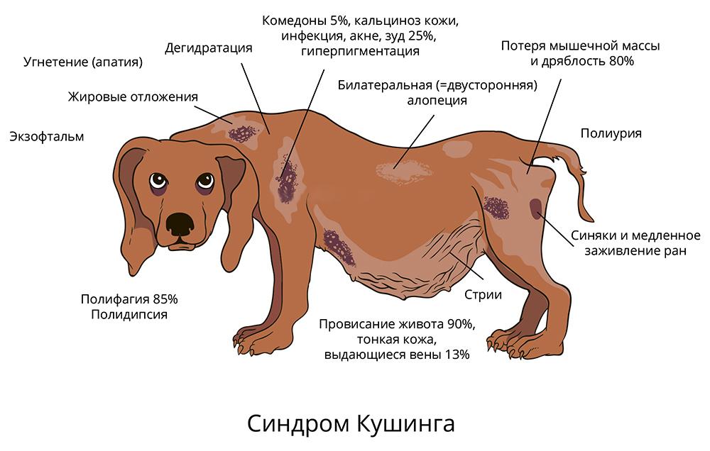 Кожные заболевания собак — как выглядят, чем лечить 22